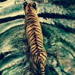 animale_012