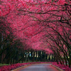 Tablou canvas alee toamna copaci rosii