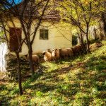 Tablou Peisaj Pkey  015 canvas - bestcanvas.ro